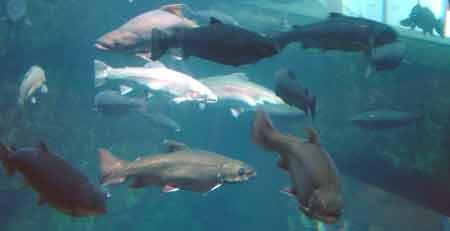 TravelerEdge - Minnesota - Duluth - Great Lakes Aquarium